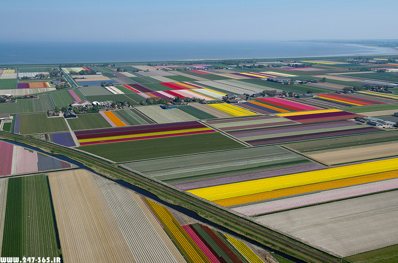 http://dl.247-365.ir/pic/earth_and_nature/tulip_farm_in_netherlands/Tulip_Farm_In_Netherlands_01.jpg