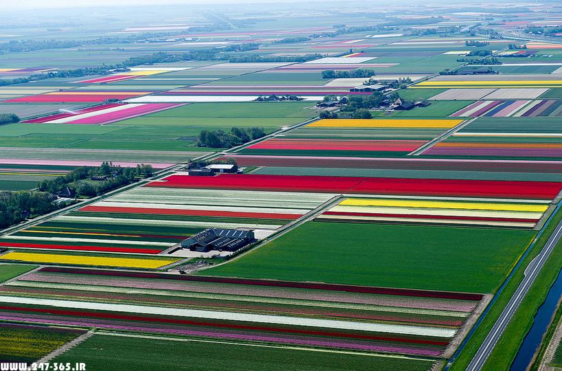 http://dl.247-365.ir/pic/earth_and_nature/tulip_farm_in_netherlands/Tulip_Farm_In_Netherlands_02.jpg