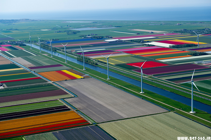 http://dl.247-365.ir/pic/earth_and_nature/tulip_farm_in_netherlands/Tulip_Farm_In_Netherlands_03.jpg