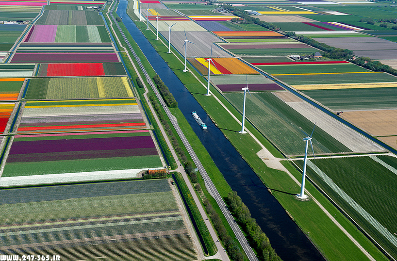 http://dl.247-365.ir/pic/earth_and_nature/tulip_farm_in_netherlands/Tulip_Farm_In_Netherlands_04.jpg
