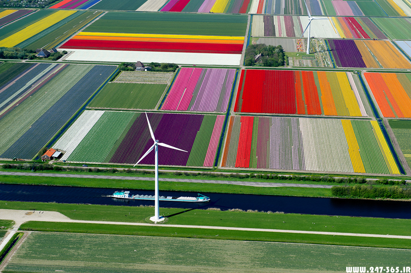 http://dl.247-365.ir/pic/earth_and_nature/tulip_farm_in_netherlands/Tulip_Farm_In_Netherlands_05.jpg