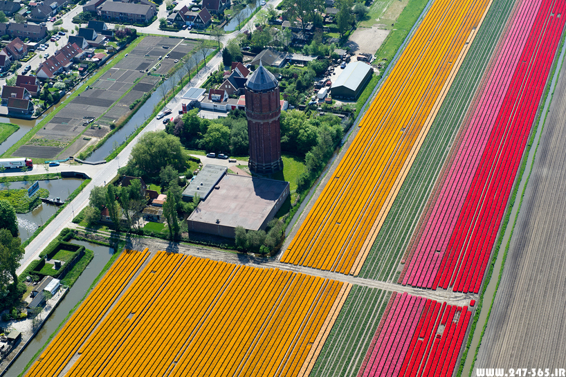 http://dl.247-365.ir/pic/earth_and_nature/tulip_farm_in_netherlands/Tulip_Farm_In_Netherlands_06.jpg