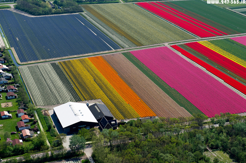 http://dl.247-365.ir/pic/earth_and_nature/tulip_farm_in_netherlands/Tulip_Farm_In_Netherlands_08.jpg