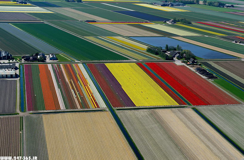 http://dl.247-365.ir/pic/earth_and_nature/tulip_farm_in_netherlands/Tulip_Farm_In_Netherlands_10.jpg