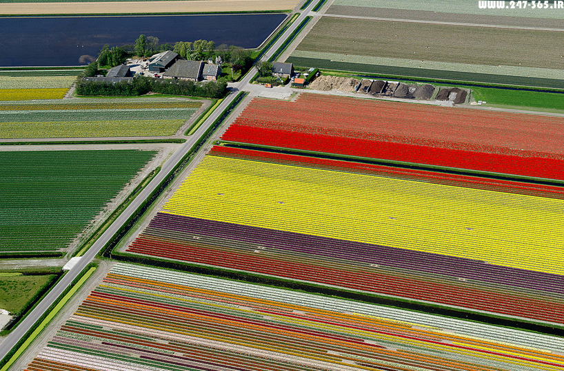 http://dl.247-365.ir/pic/earth_and_nature/tulip_farm_in_netherlands/Tulip_Farm_In_Netherlands_11.jpg