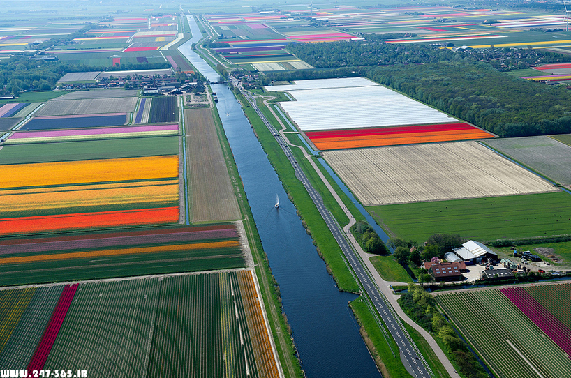 http://dl.247-365.ir/pic/earth_and_nature/tulip_farm_in_netherlands/Tulip_Farm_In_Netherlands_12.jpg