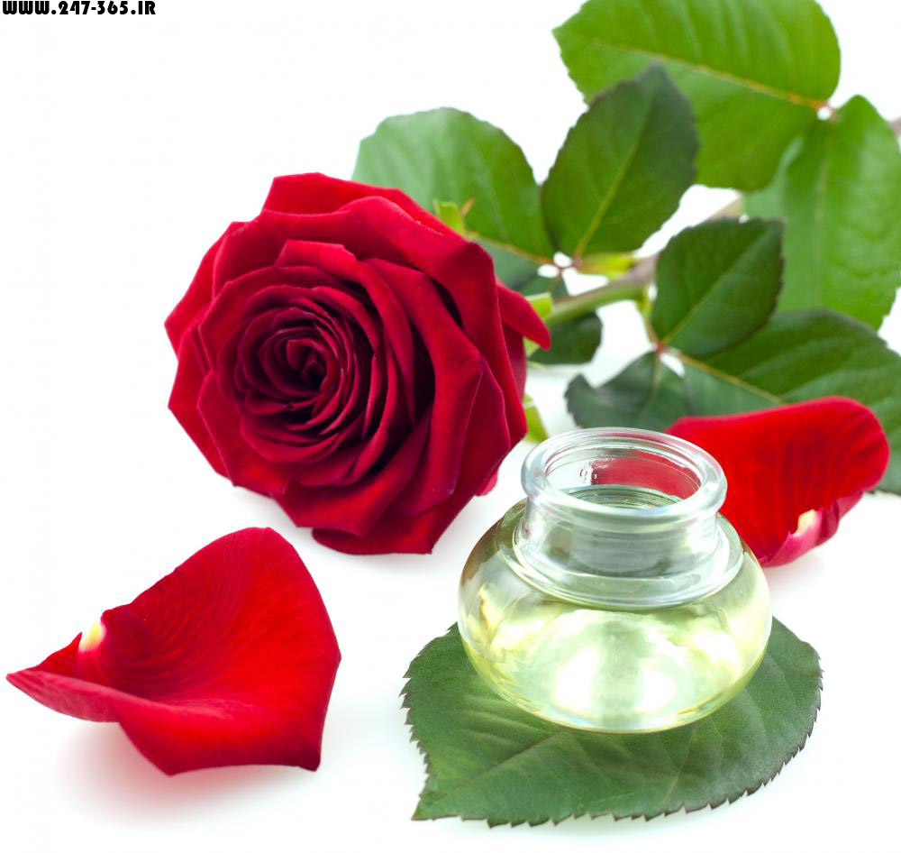http://dl.247-365.ir/pic/gol/red_rose_4/Red_Rose_4_15.jpg