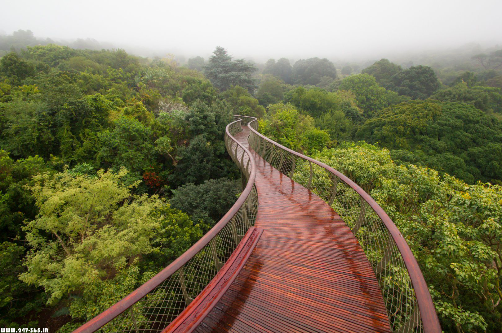 http://dl.247-365.ir/pic/tak_ax/Canopy_Walkway_In_Cape_Town.jpg
